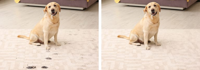 remove pet stains on carpet in denton texas