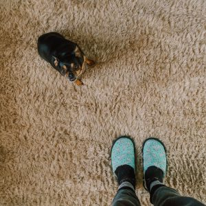 dog pet cat poop pee stain removal, carpet cleaning company in denton, cheap, best company
